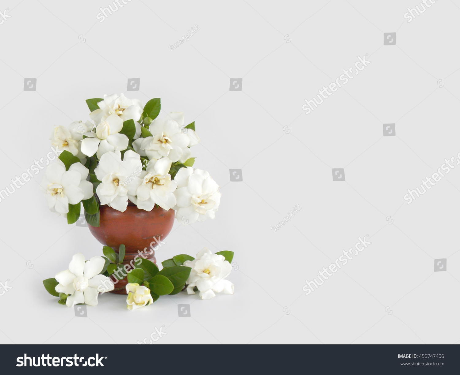 Beautiful Gardenia Flower Bouquet Vase On Stock Photo (Safe to Use ...