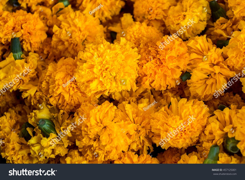 Orange Yellow Marigold Flowers Close Marigold Stock Photo 100