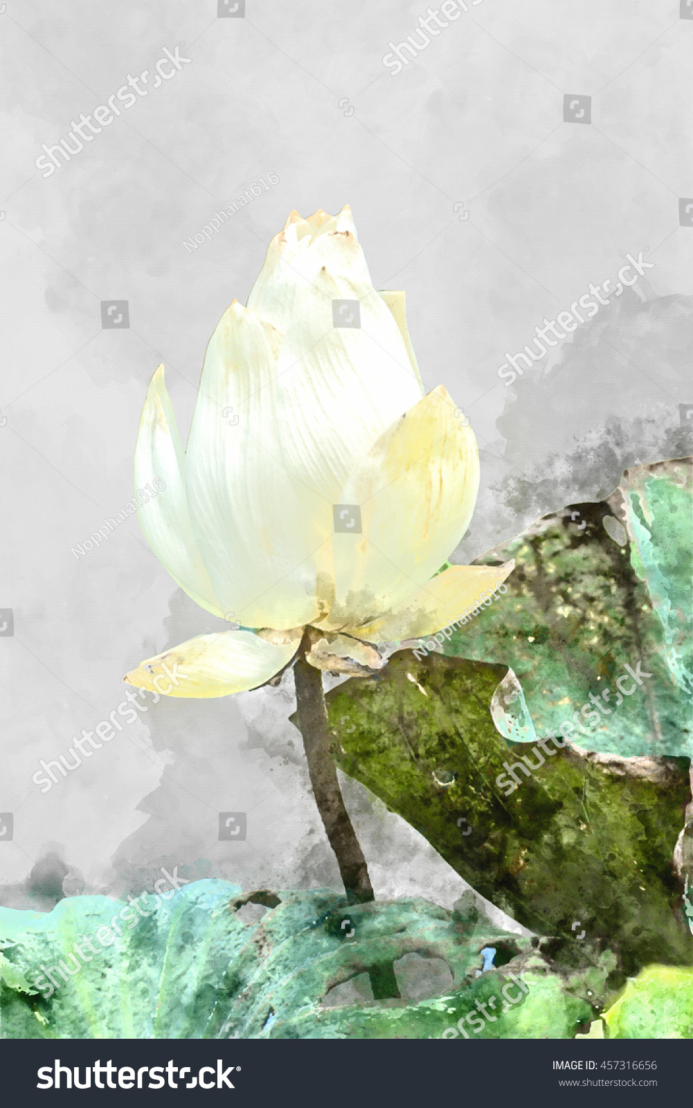 Scientific name for lotus flower image collections flower wallpaper hd watercolor image white lotus flower scientific stock illustration watercolor image of white lotus flower scientific name mightylinksfo