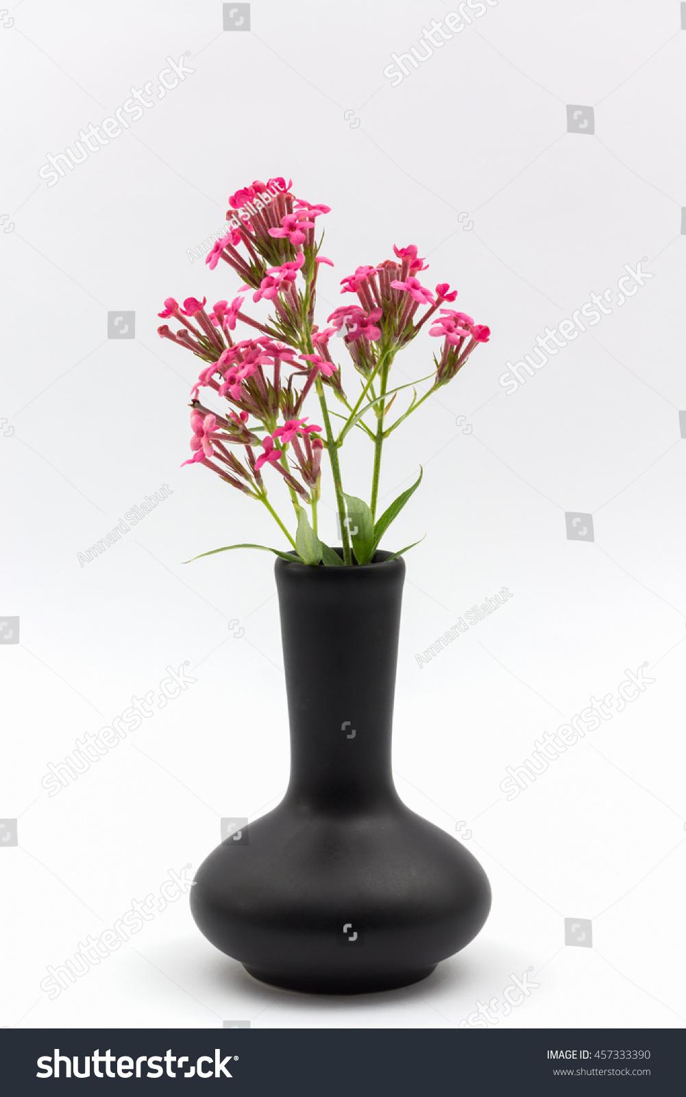 Pink Flower Vase Black On White Stock Photo Edit Now 457333390