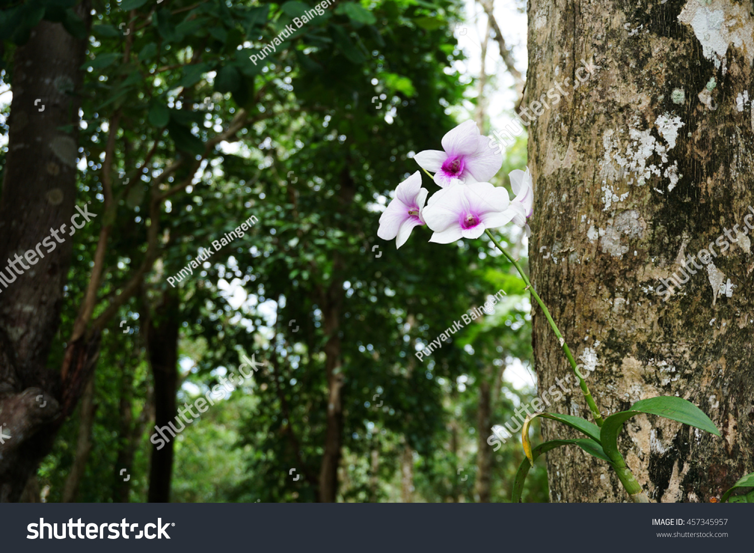 Purple White Orchid Flowers Blooming On Stock Photo Edit Now