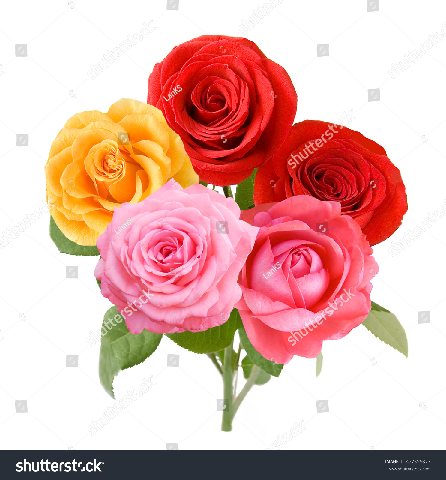 Redyellow Pink Rose Flowers Bunch Isolated Stock Photo Edit Now