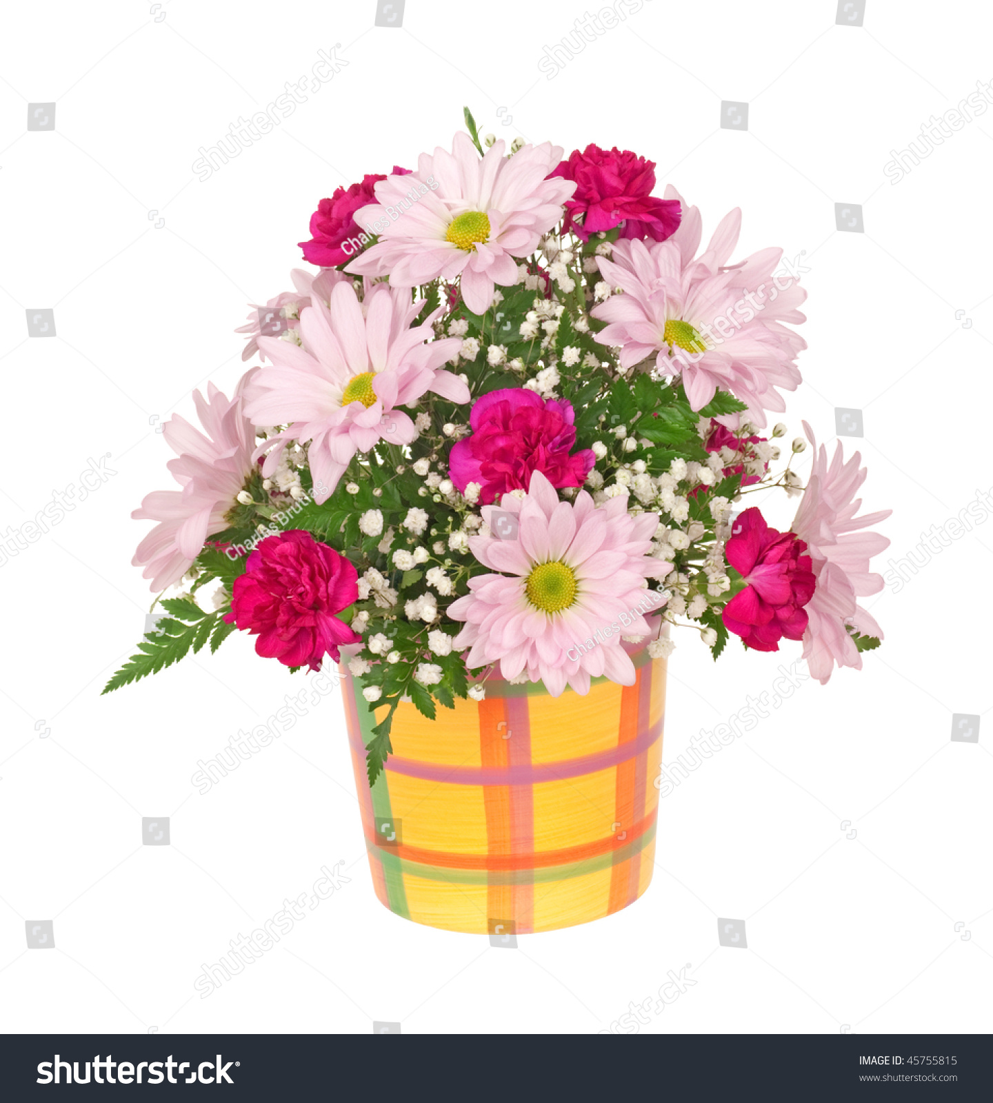 Carnation daisy babys breath flower bouquet stock photo royalty carnation daisy and babys breath flower bouquet in a pot isolated on white izmirmasajfo