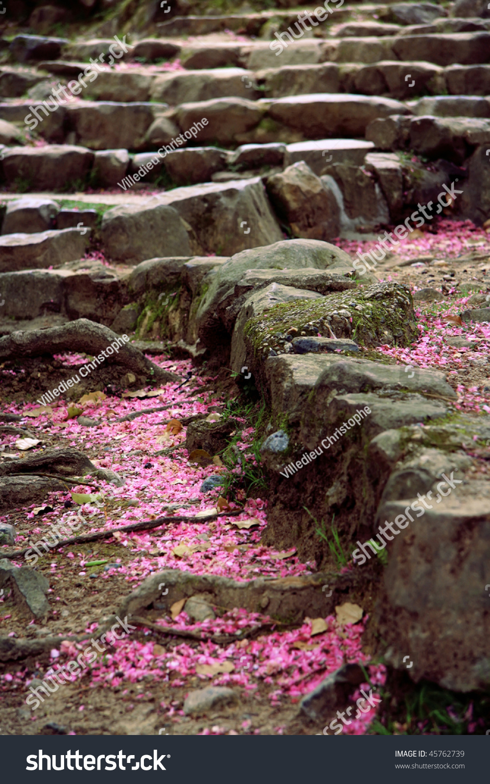 Beautiful Rocky Stairs Covered By Cherry Stock Photo Edit Now
