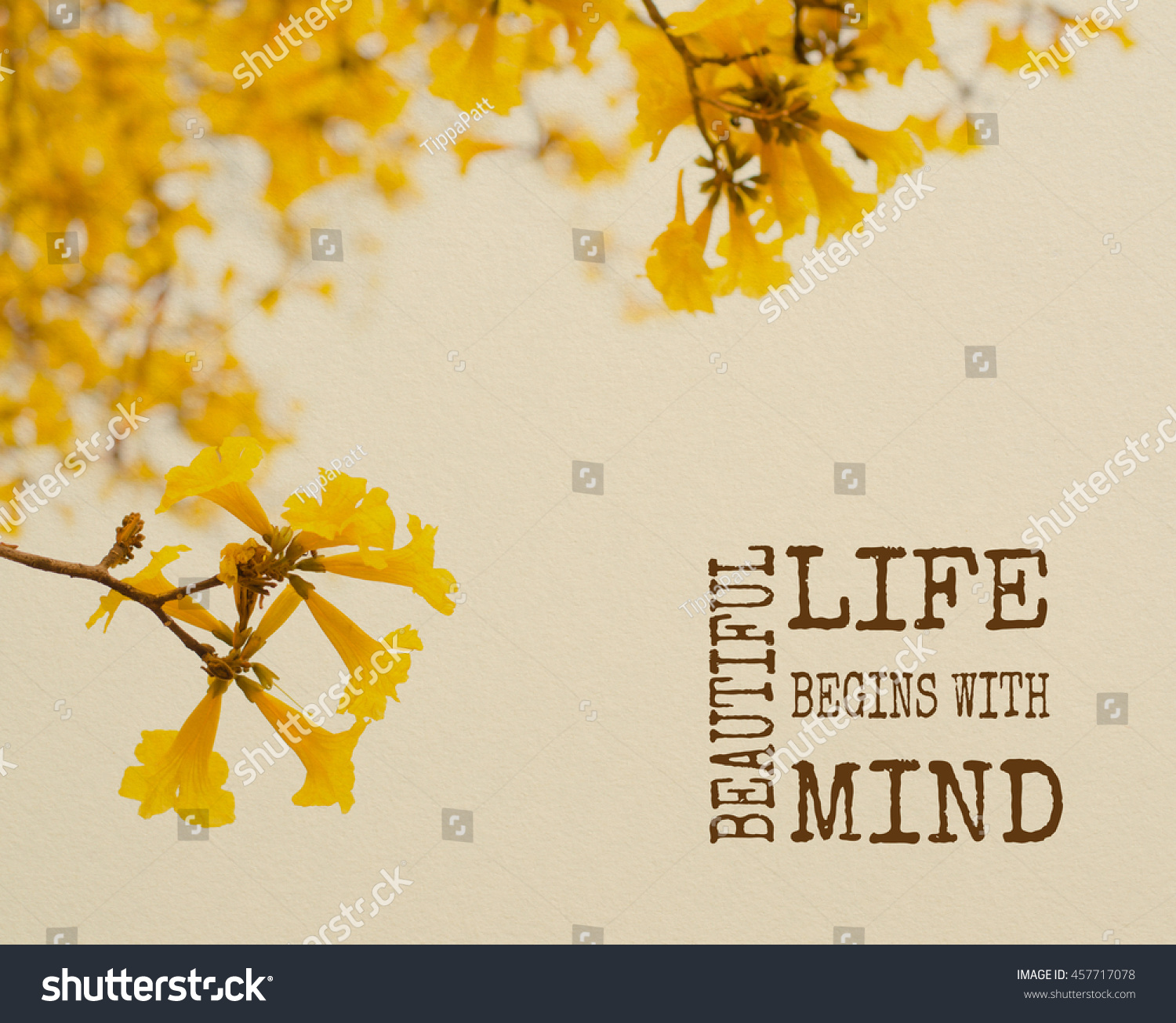 Life Inspiration Quote About Beautiful Mind Stock Photo Edit Now
