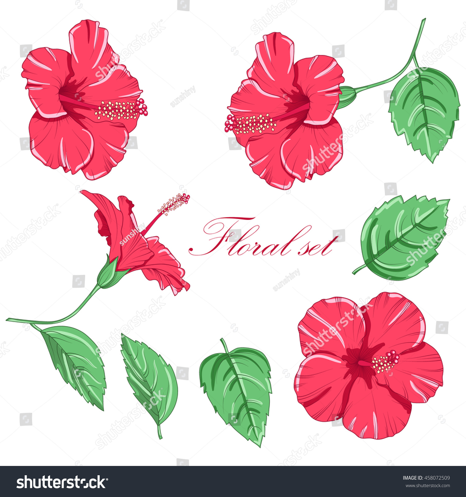 Drawn hibiscus flowers isolated on white stock vector 2018 drawn hibiscus flowers isolated on white background vector illustration izmirmasajfo