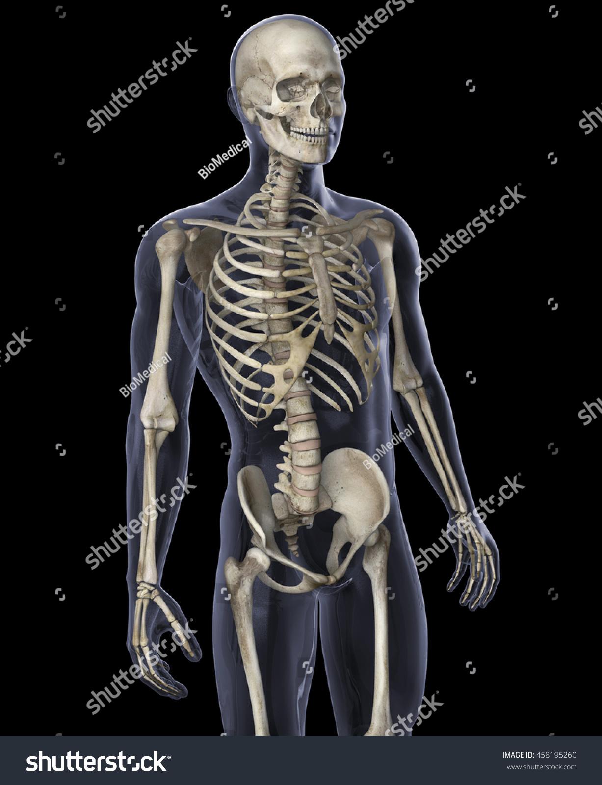 3 D Illustration Skeleton On Black Background Ilustración de ...