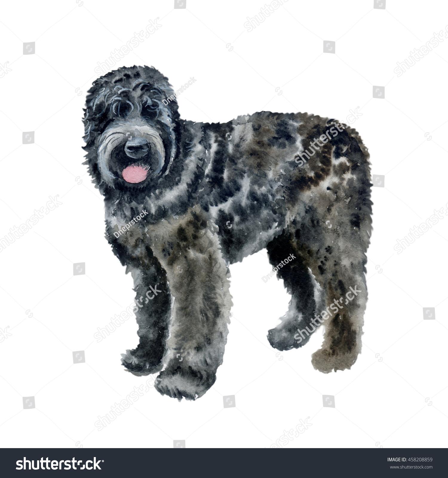 Watercolor Closeup Portrait Black Russian Terrier Stock Illustration ...