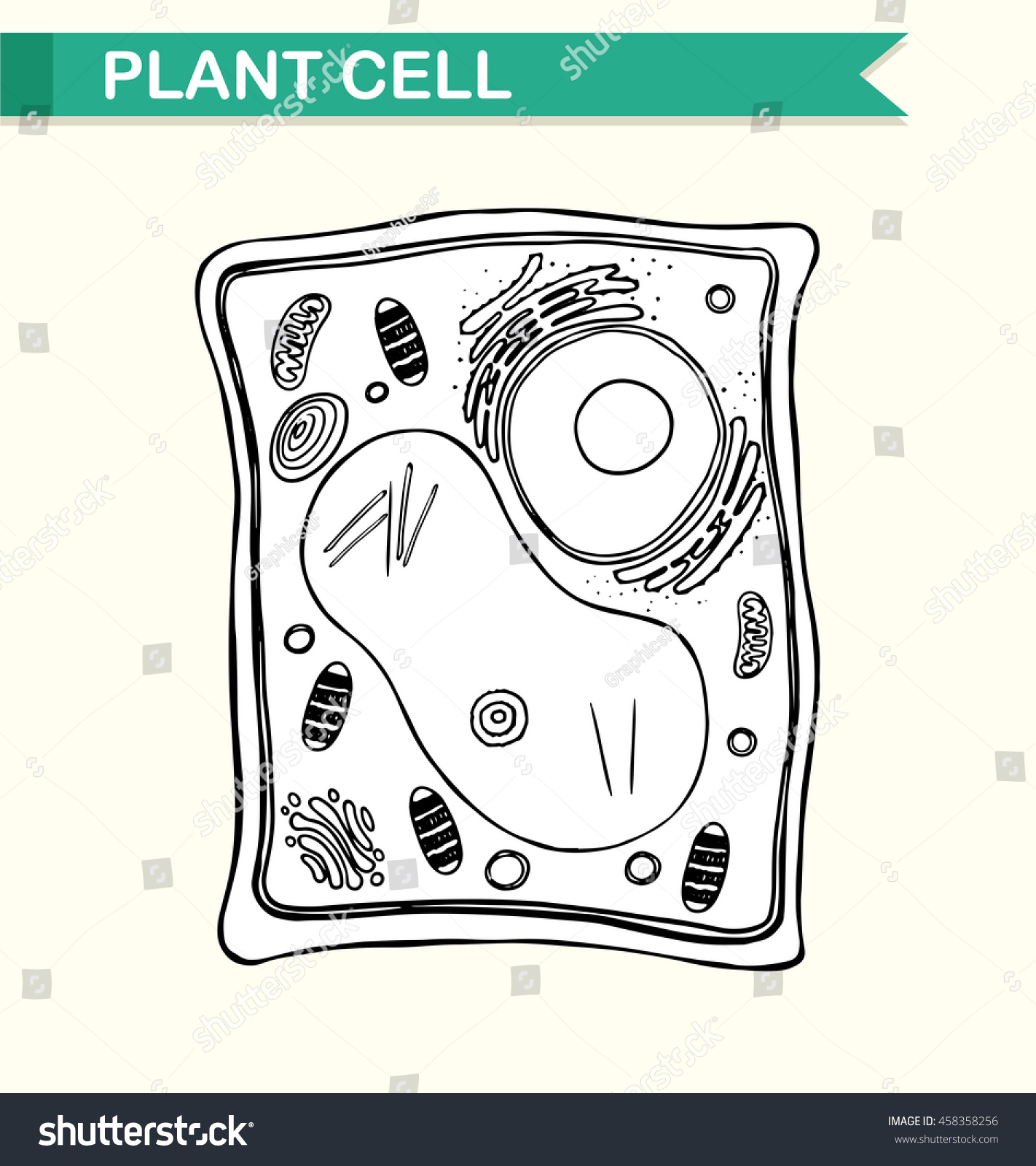Diagram Showing Plant Cell Black White Stock Vector Royalty Free Model In And Illustration