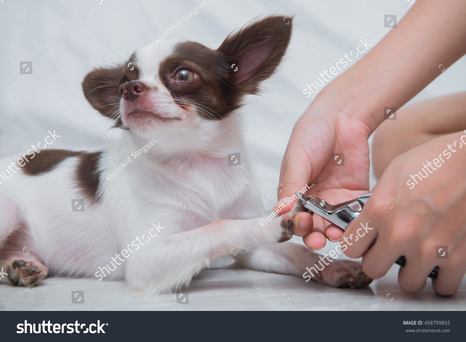 Clipping Nail Dog Stock Photo 458799892 - Shutterstock