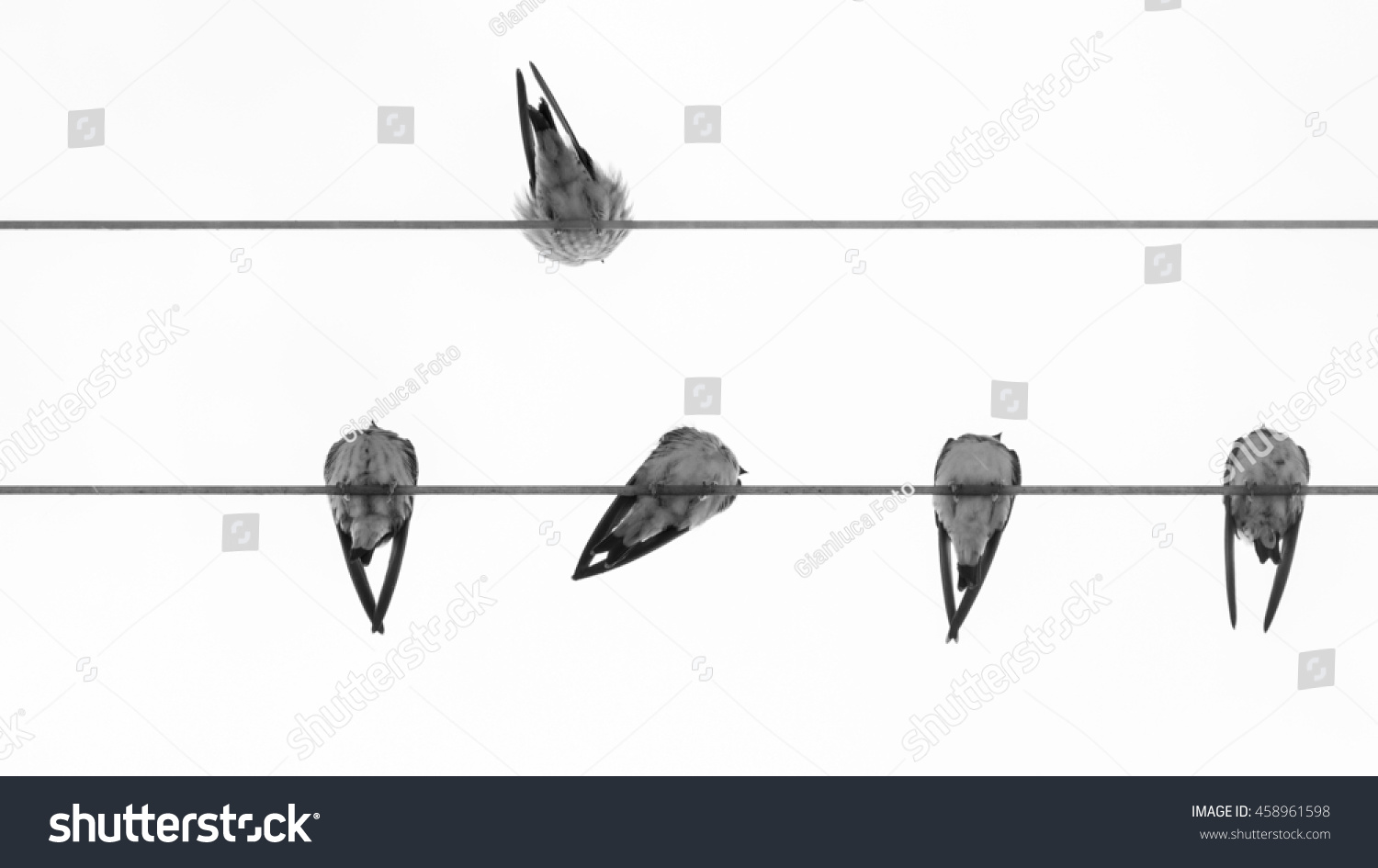 Group Swallows On Wires Swallow On Stock Photo (Download Now ...