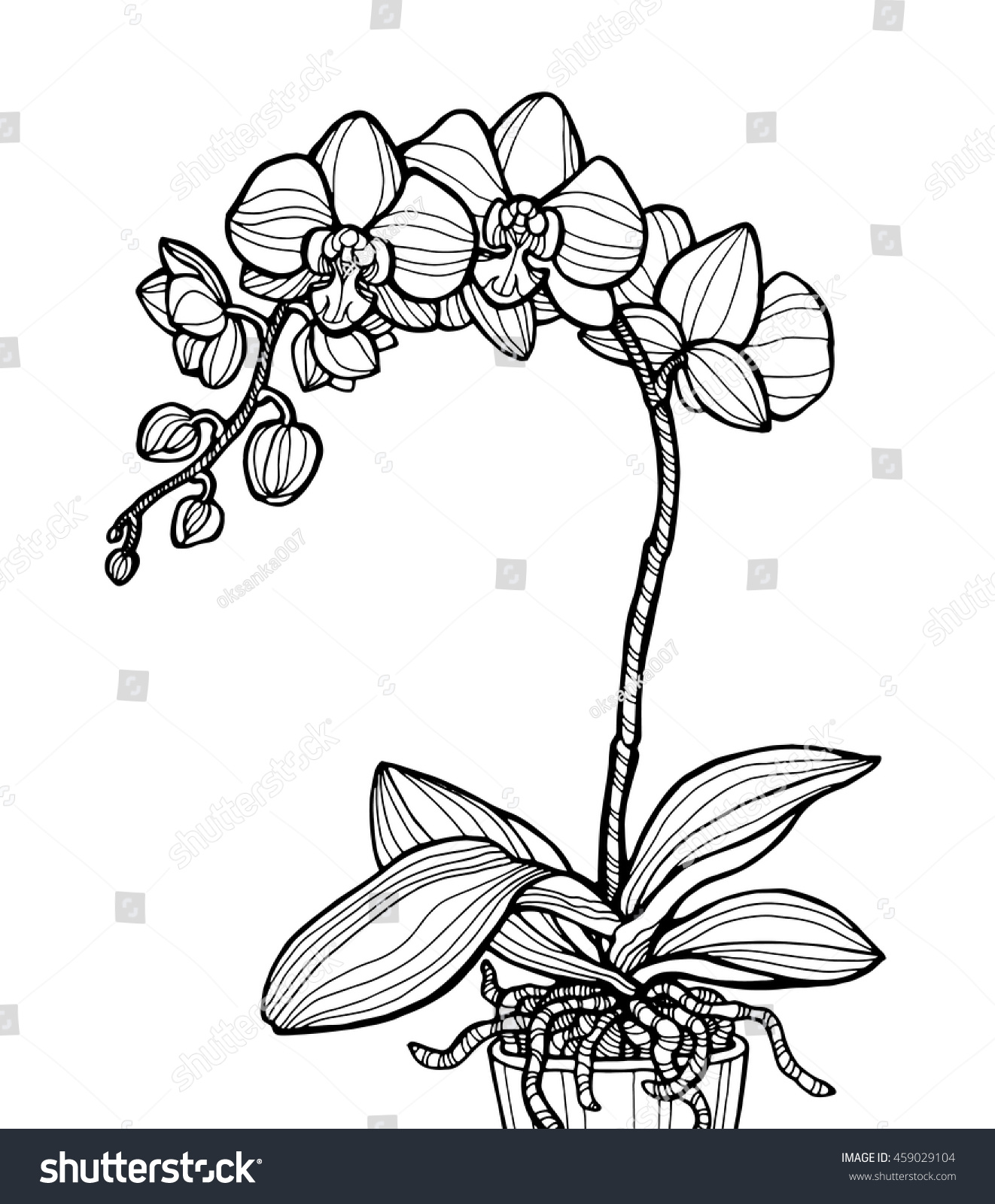 Exotic Orchid Flower Isolated Home Plant Stock Vector (Royalty Free ...