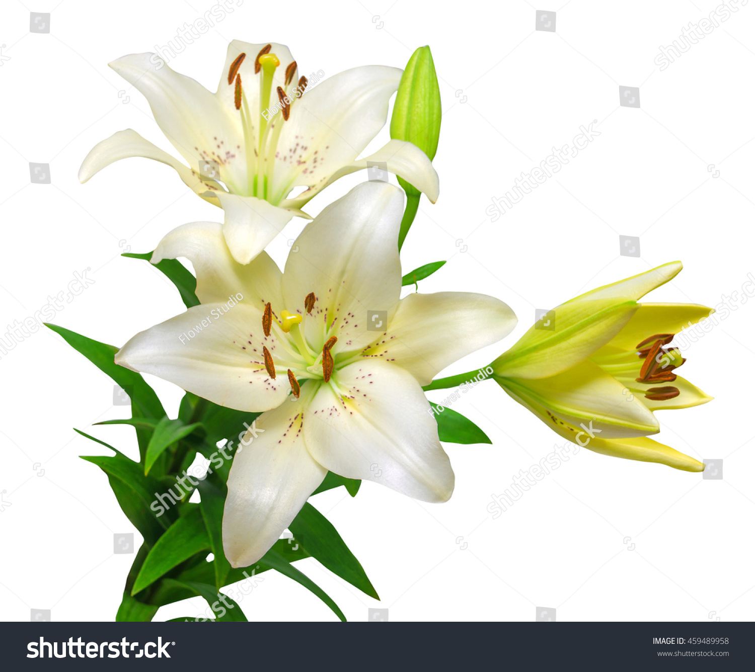 Bouquet beautiful white lily flowers isolated stock photo edit now bouquet of beautiful white lily flowers isolated on white background izmirmasajfo