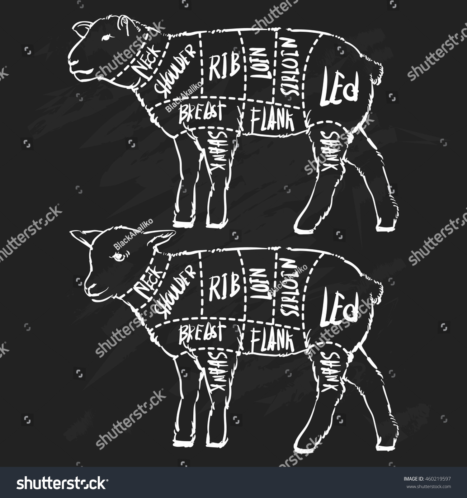 Meat Cuts Diagrams Butcher Shop Scheme Stock Vector Royalty Free Cut For Of Lamb Animal Silhouette