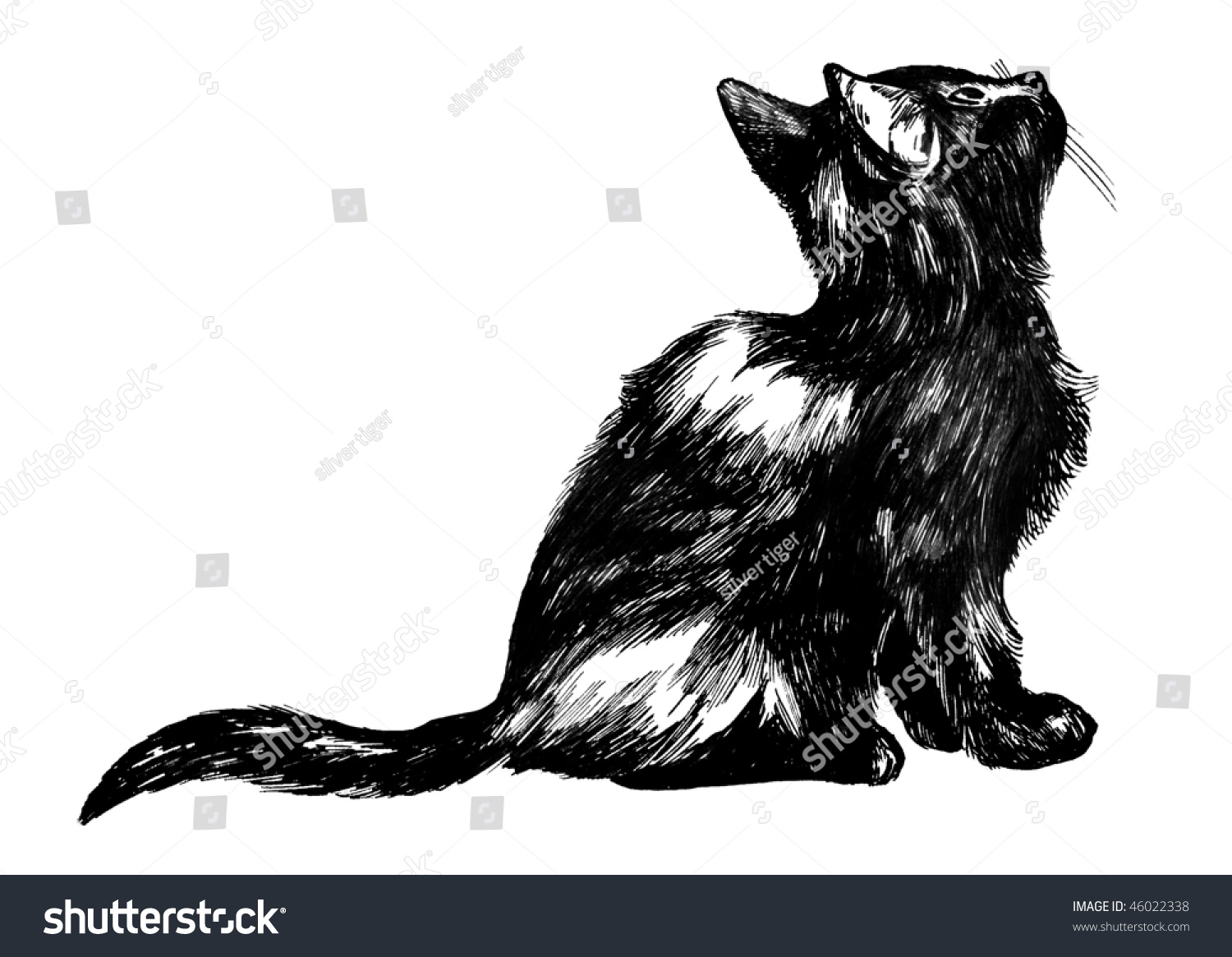 Hand Drawn Cat Detailed Ink Drawing Stock Illustration