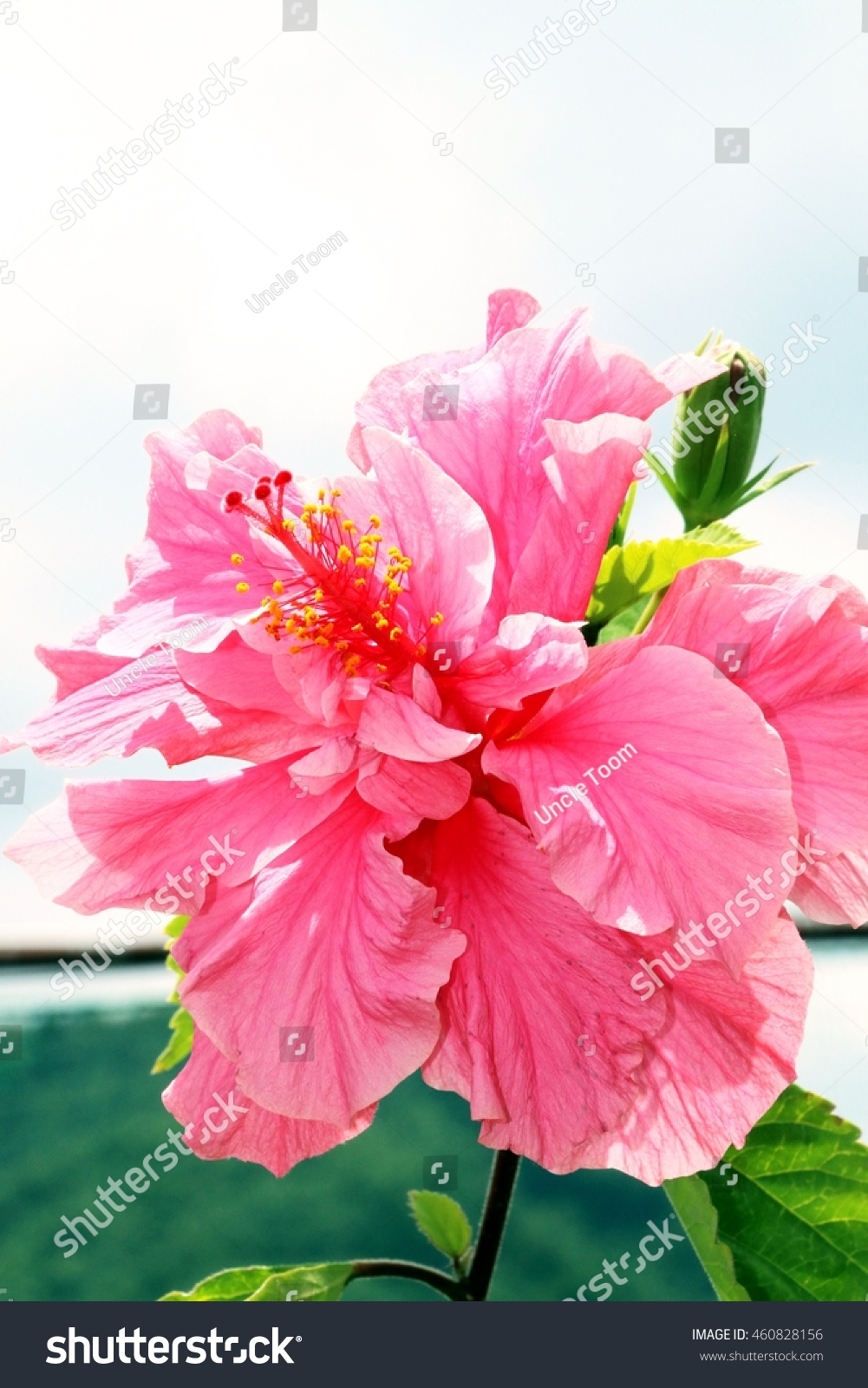 Beautiful Flowers Many Kinds Beautiful Flowers Stock Photo Edit Now
