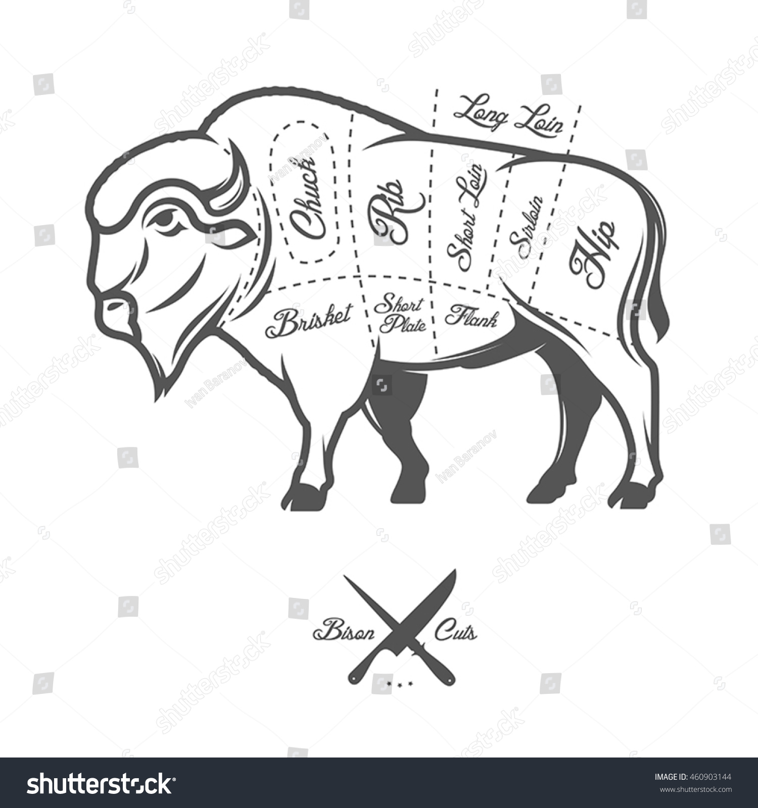 vintage butcher cuts bison buffalo scheme stock vector royalty free CT Diagram vintage butcher cuts of bison buffalo scheme diagram
