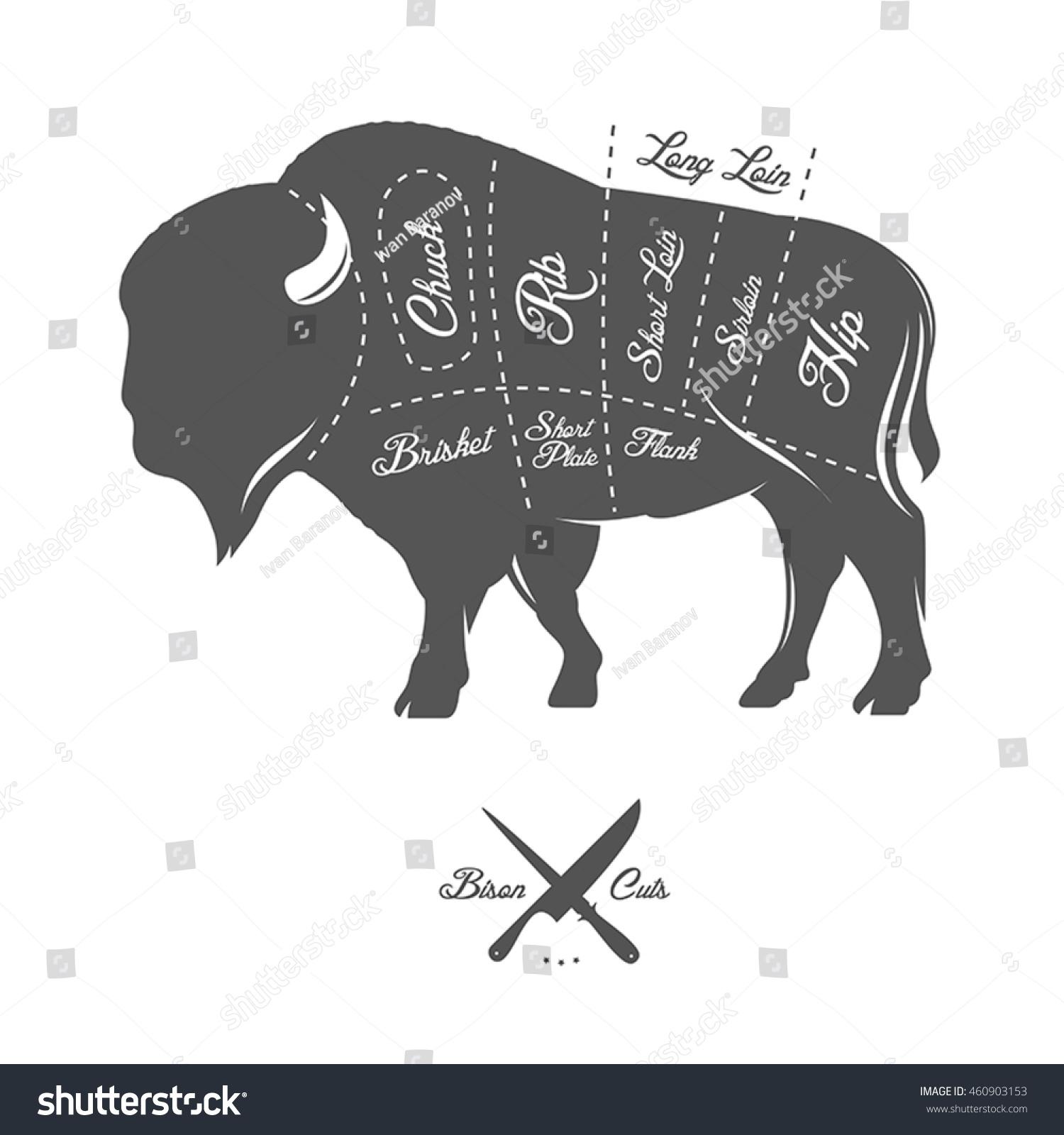 Vintage Butcher Cuts Bison Buffalo Scheme Stock Vector