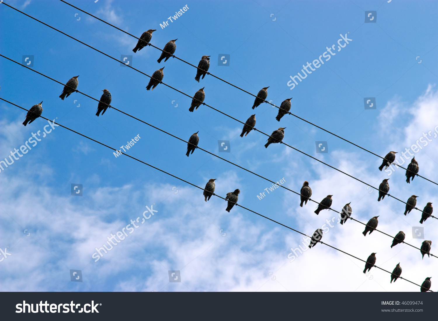 Birds Lined On Telephone Lines Against Stock Photo (Royalty Free ...