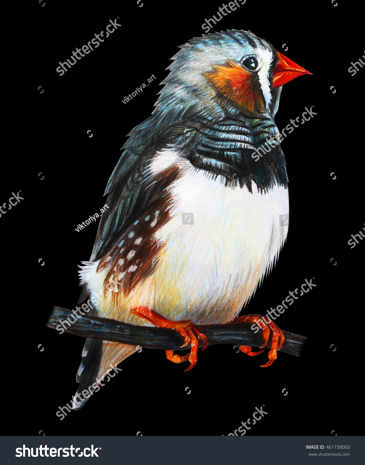 Finches bird drawing on black background stock illustration finches bird drawing on black background biocorpaavc