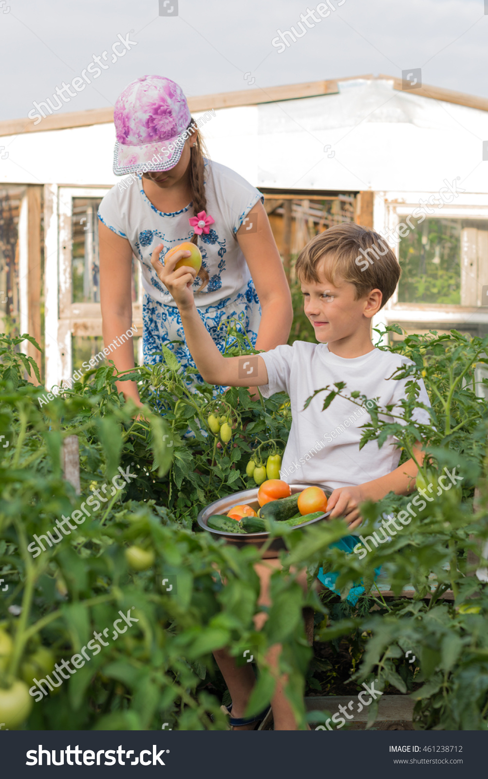 Children Harvest Vegetables In A Family Garden Stock Photo