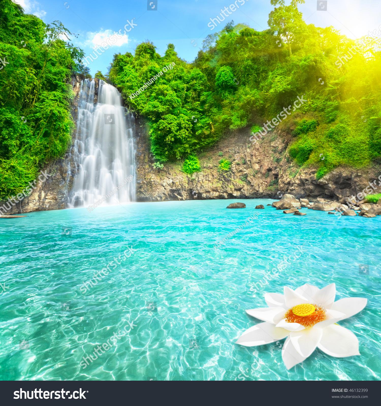 Beautiful Lotus Flower Waterfall Pool Vietnam Stock Photo Edit Now