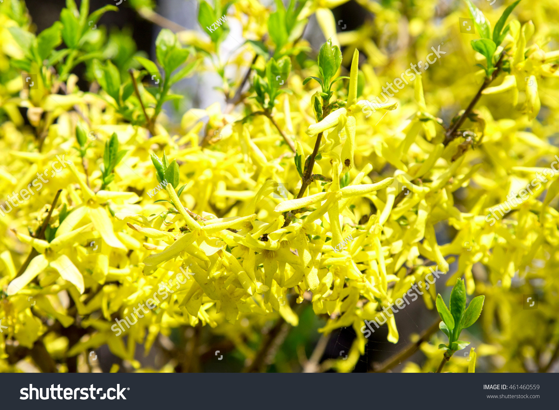 Bright Spring Flowers Landscape Photos Stock Photo 461460559