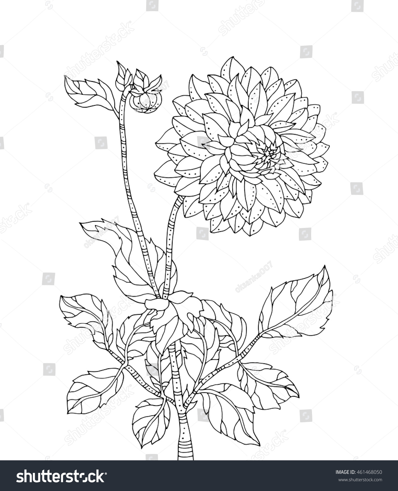chrysanthemum coloring pages virtren com
