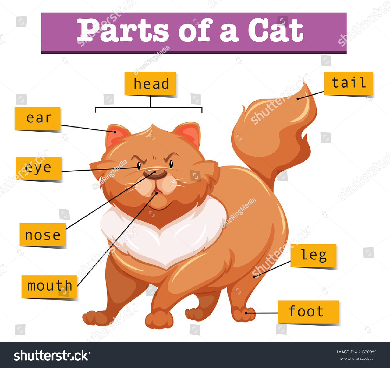 diagram showing parts cat illustration stock vector royalty free rh shutterstock com Cow's Tail Diagram cat mouth diagram with salivary glands