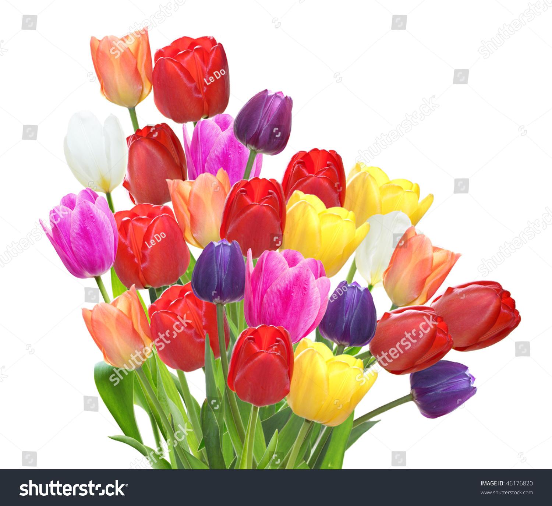 Bundle Beautiful Tulip Flowers Isolated On Stock Photo Edit Now