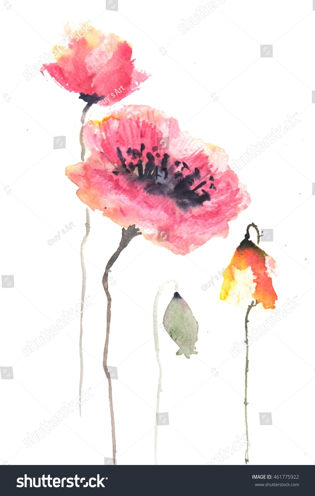Red Poppy Flowers Watercolor Illustrator Ez Canvas