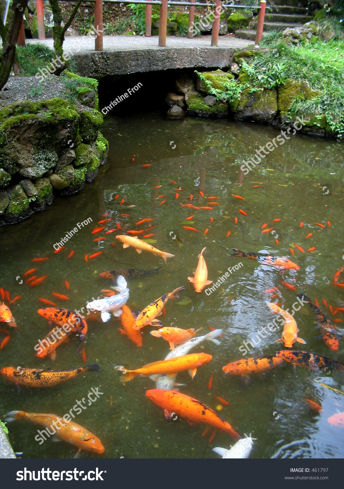 Rainbow collection japanese koi temple pool stock photo for Japan koi pool
