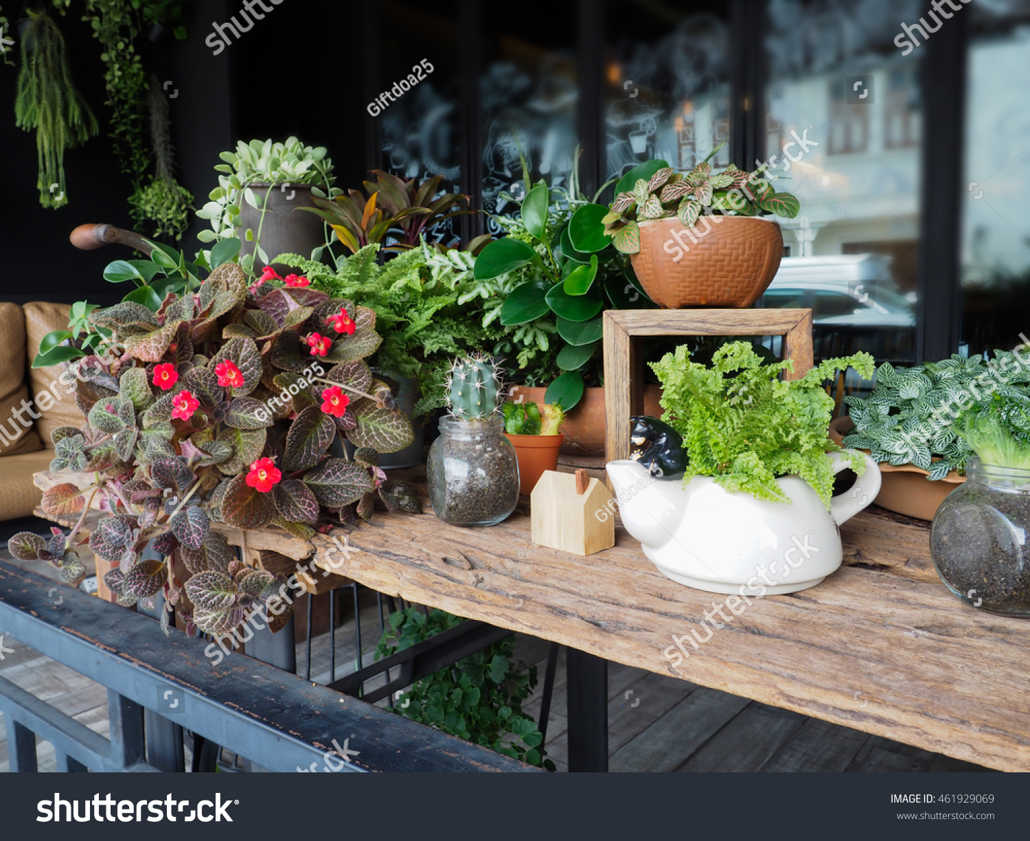Small Plants Decoration Items Placed On Stock Photo (Royalty Free ...