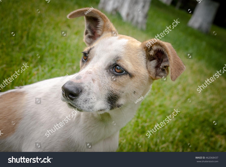 Homeless Dog Adorable Face Cute Puppy Stock