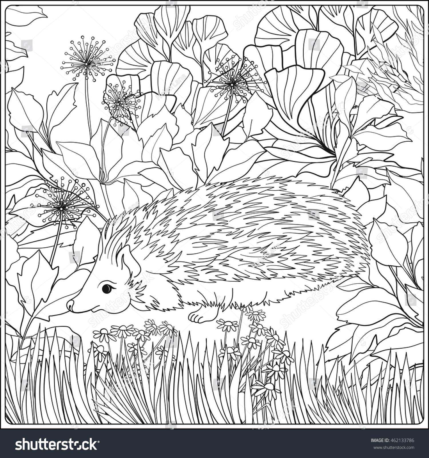 coloring page lovely hedgehog garden coloring stock vector
