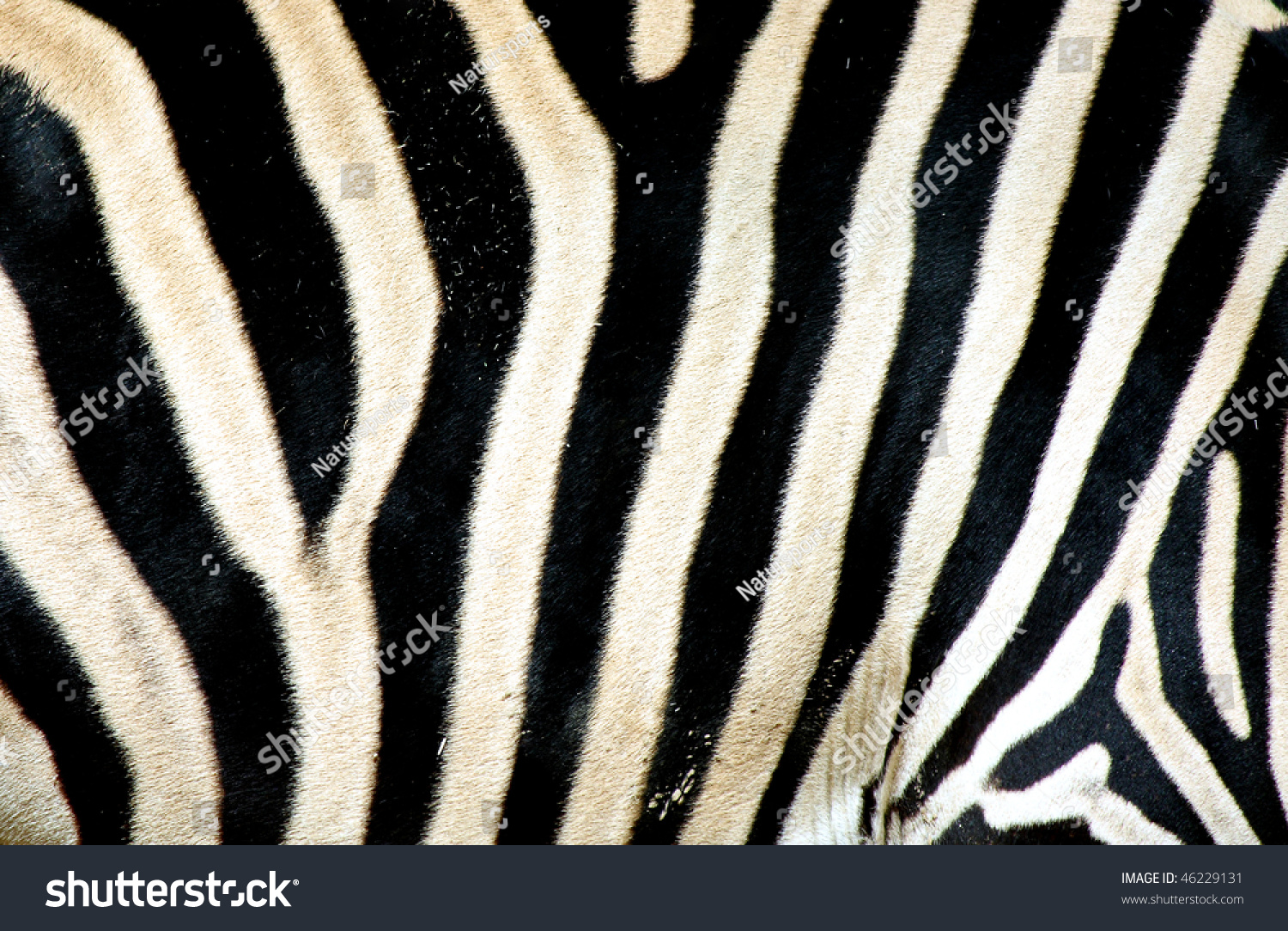 Zebra Background Equus Sp Stock Photo 46229131 Shutterstock