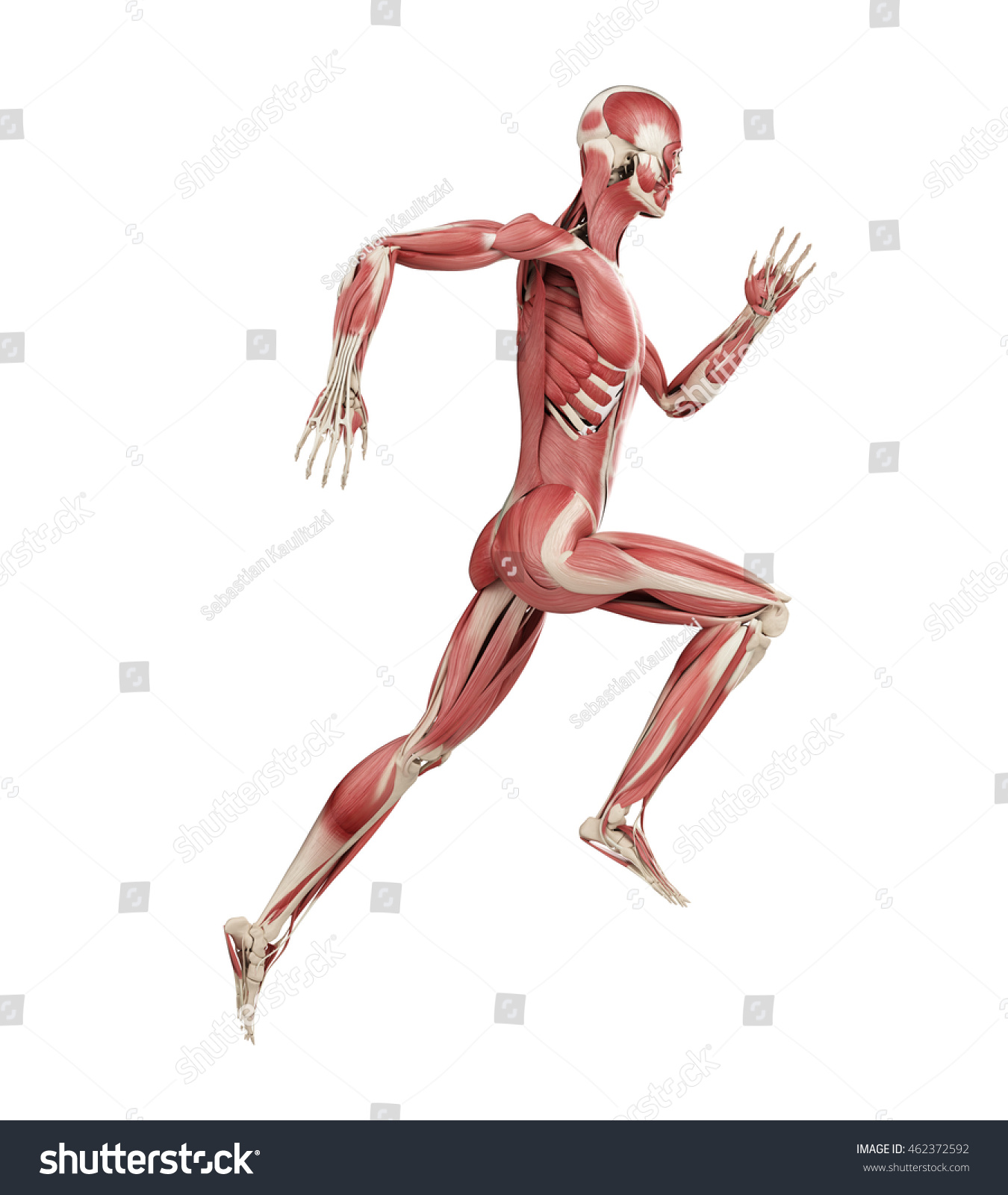 3d Rendered Medically Accurate Illustration Runners Stock ...