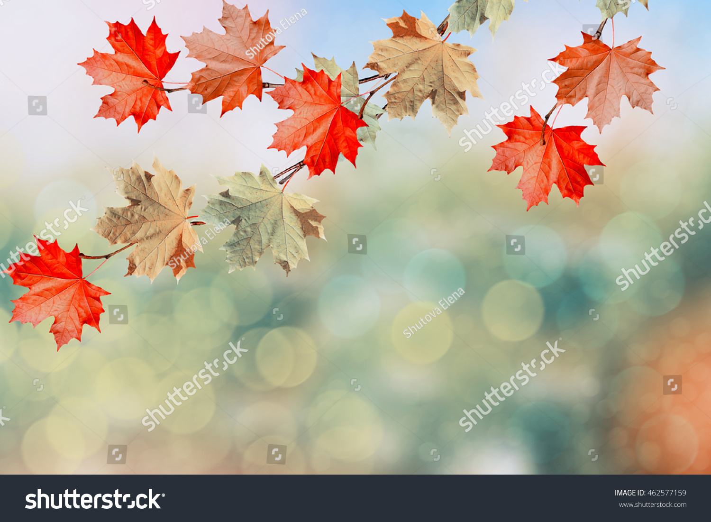 Autumn Landscape Beautiful Leaves Colorful Trees Stock Photo ...