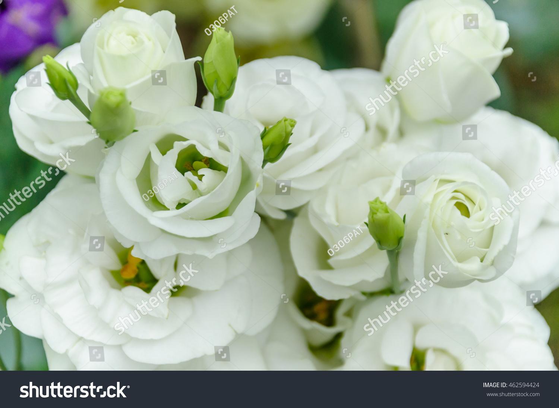 Rose Ez Canvas