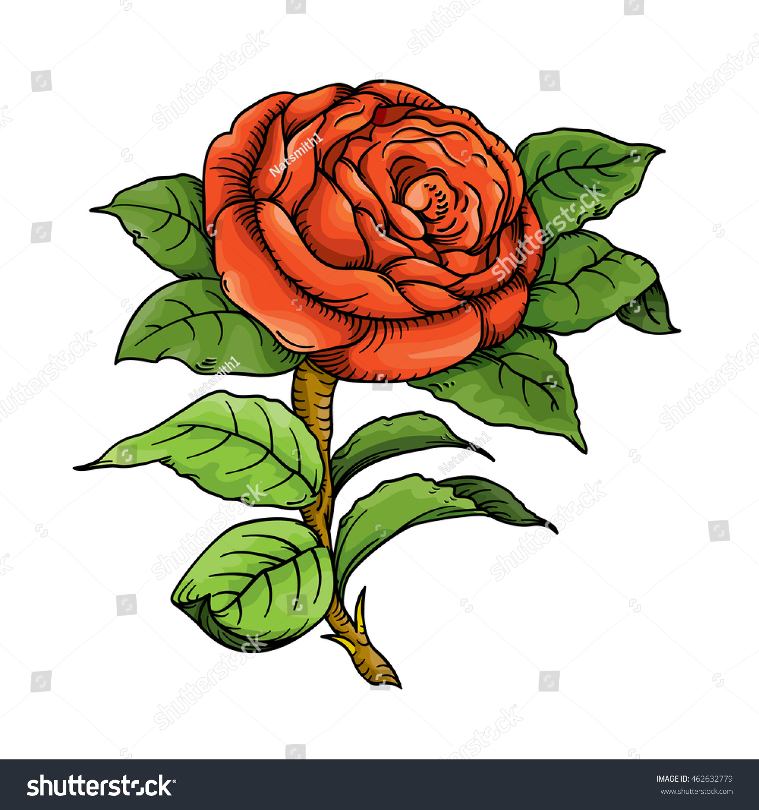 Vector Drawing Rose Easy Edit Change Stock Vector Royalty Free 462632779