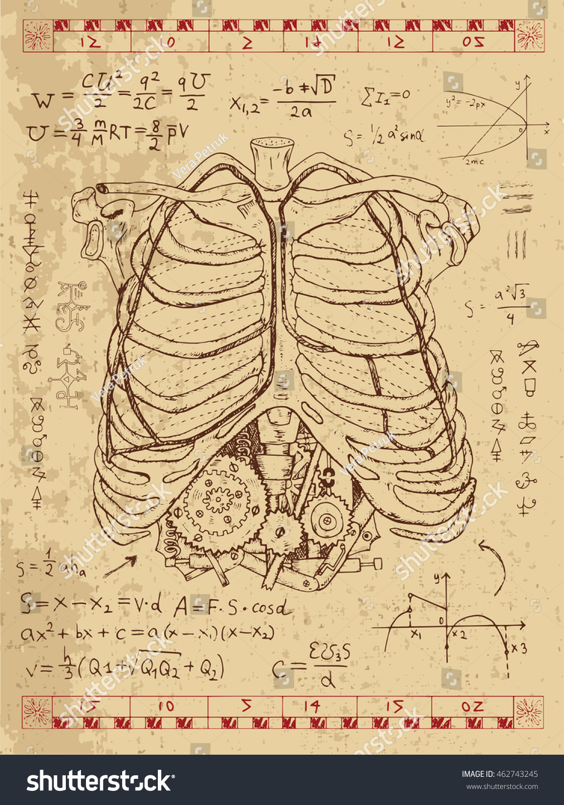Set Drawings Human Chest Bones Graphics Stock Vector Royalty Free