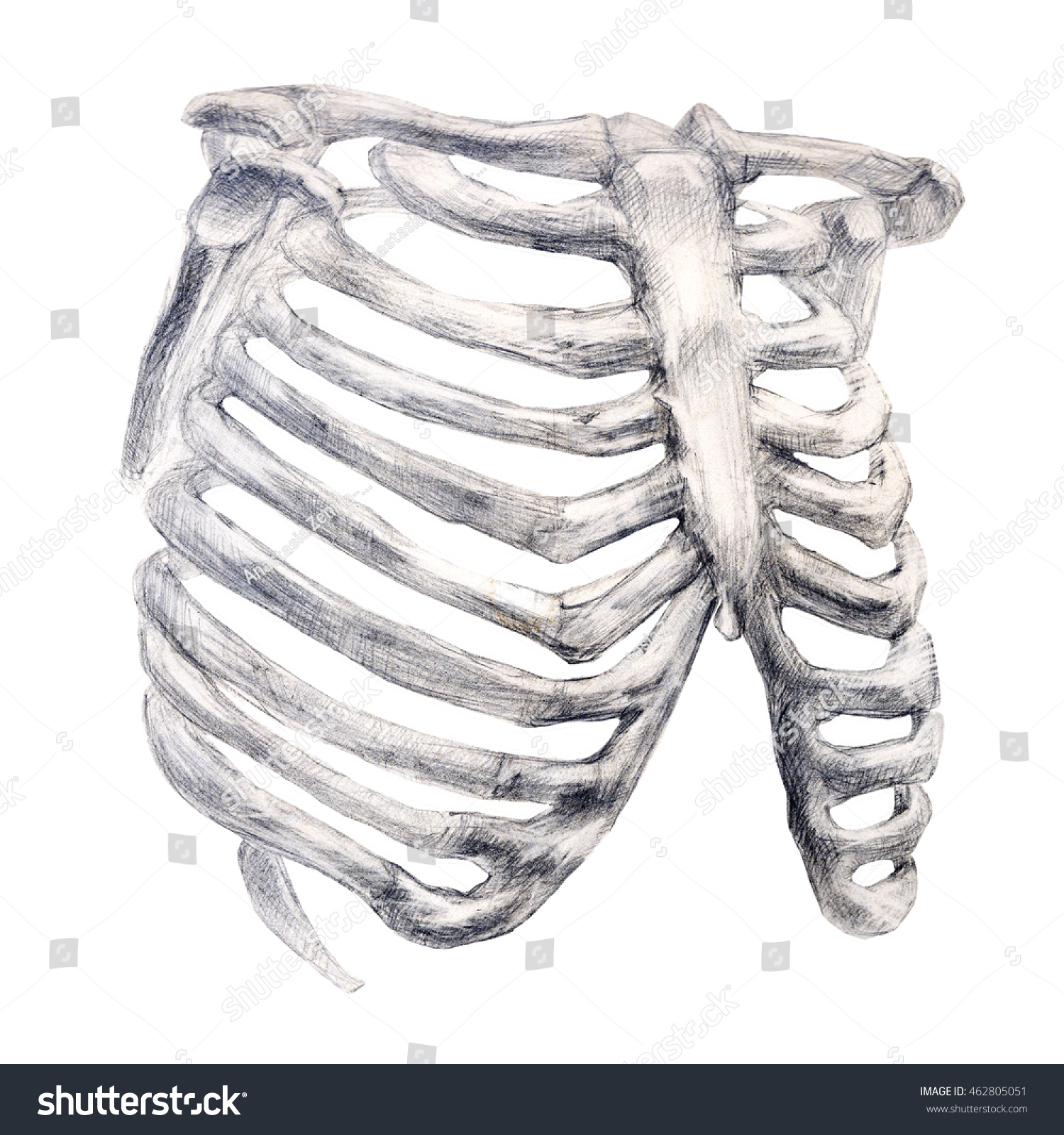 Hand Drawing Bone Skeleton Anatomical Drawing Stock Illustration ...