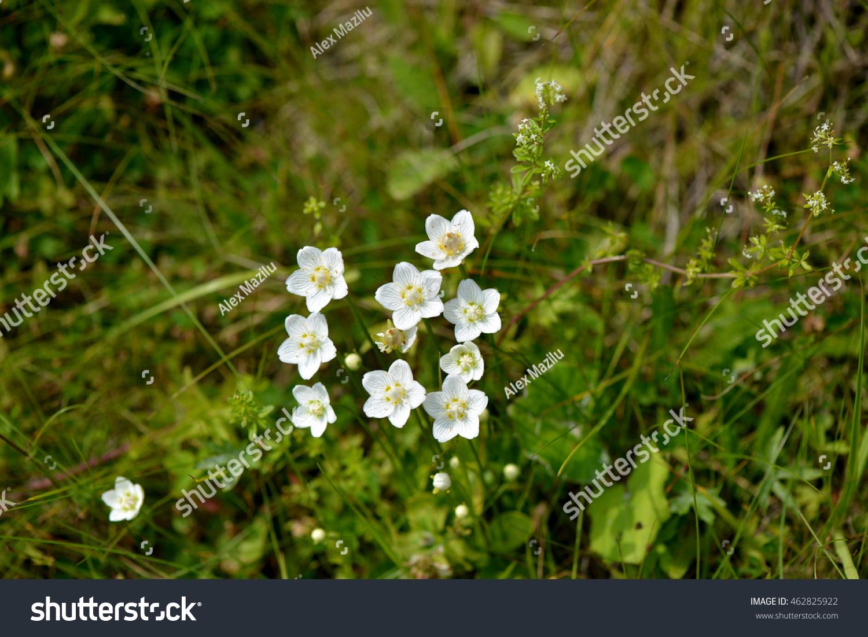 Summer White Mountain Flowers Stock Photo Edit Now 462825922