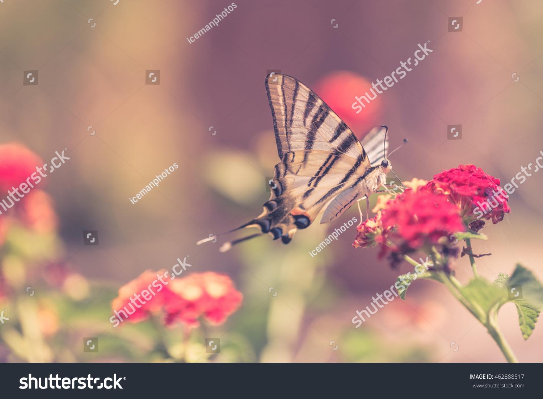 beautiful butterfly on flowers garden vintage stock photo