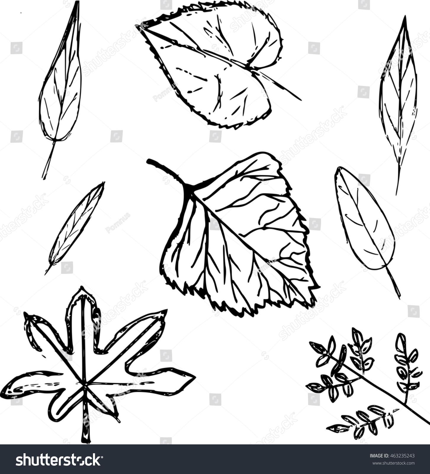 set leaves linden leaf birch leaf stock vector 463235243