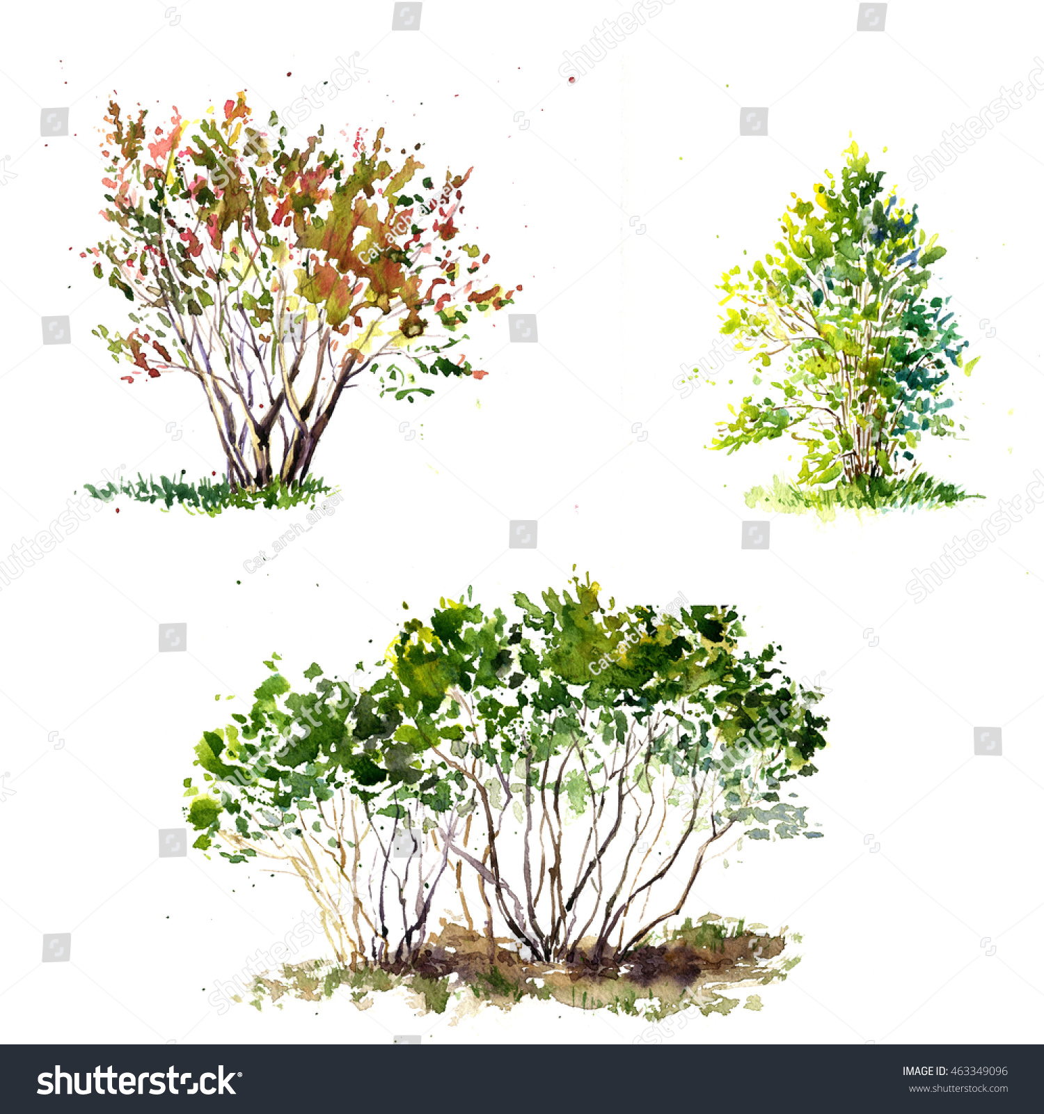 Set Green Bushes Drawing By Watercolor Stock Illustration 463349096 ... for Tree Drawing With Watercolor  143gtk