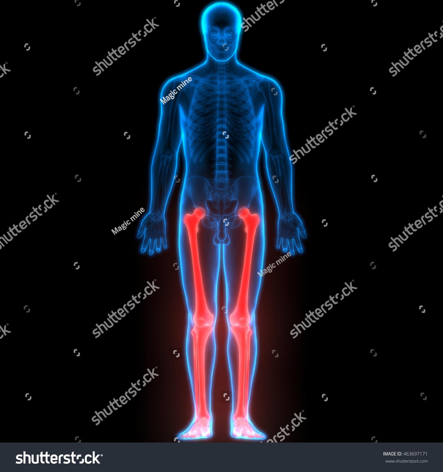 Human Body Bone Joint Pains Foot Stock Illustration 463697171