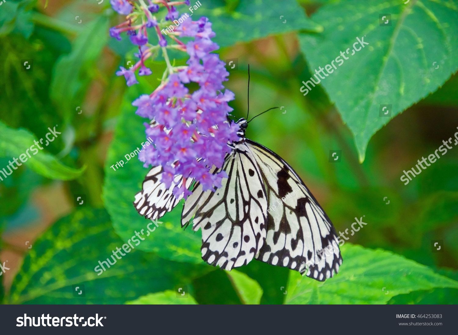 Paper Kite Butterfly On Purple Flowers Stock Photo Edit Now