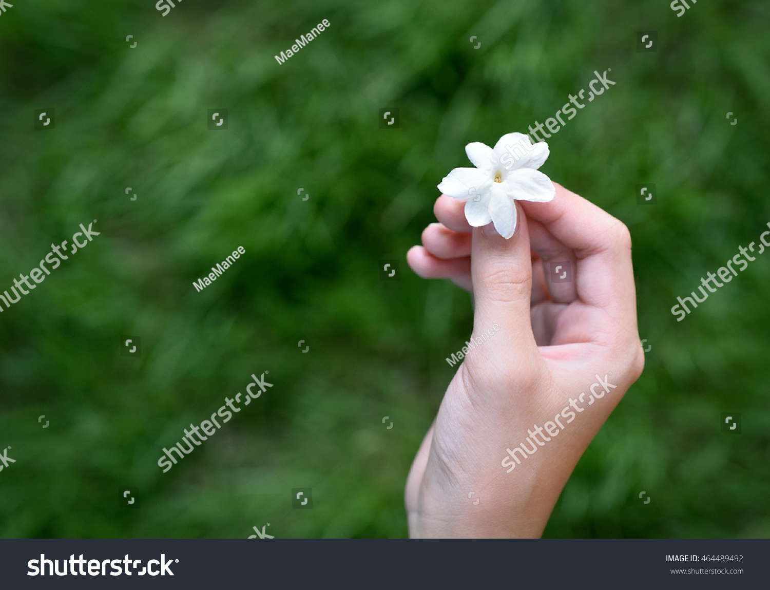 Asian girl hands holding white jasmine stock photo edit now asian girl hands holding white jasmine flowers this flower is symbol of thailand mothers day izmirmasajfo
