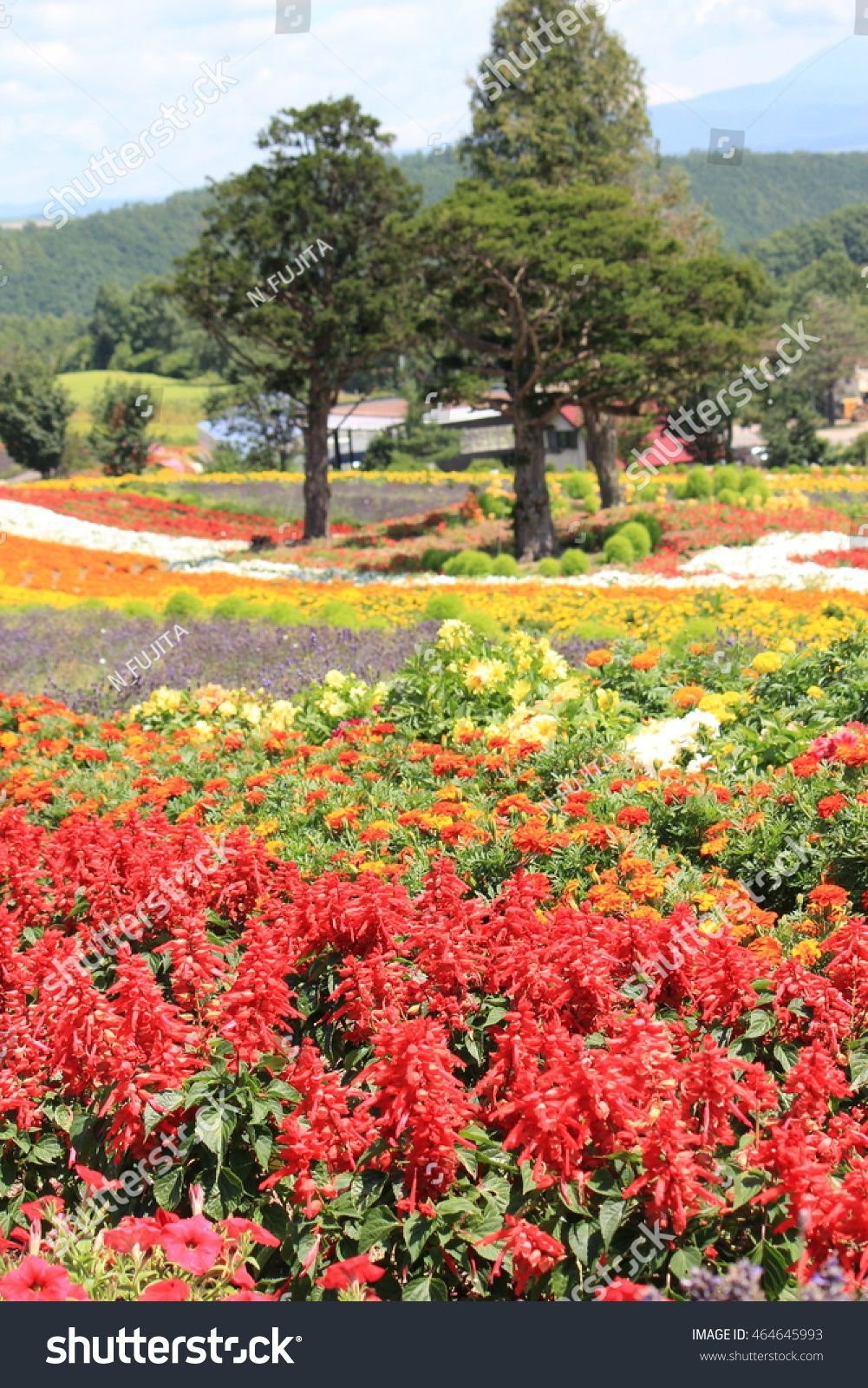 Beautiful Flower Park Biei Hokkaido Stock Photo Royalty Free